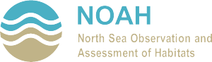 logo_noah